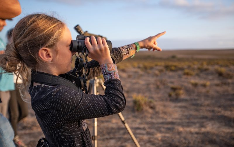 XI Sagres Birdwatching Festival
