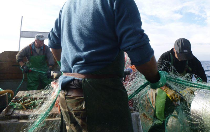 MedAves Pesca