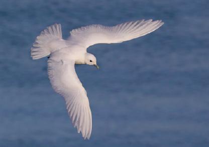 Anuário Ornitológico