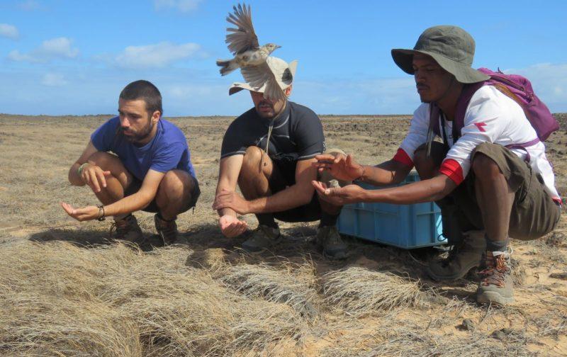 Conservação e recuperação da ilha de Santa Luzia