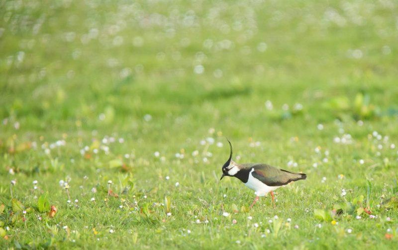 Atlas das aves invernantes e migradoras