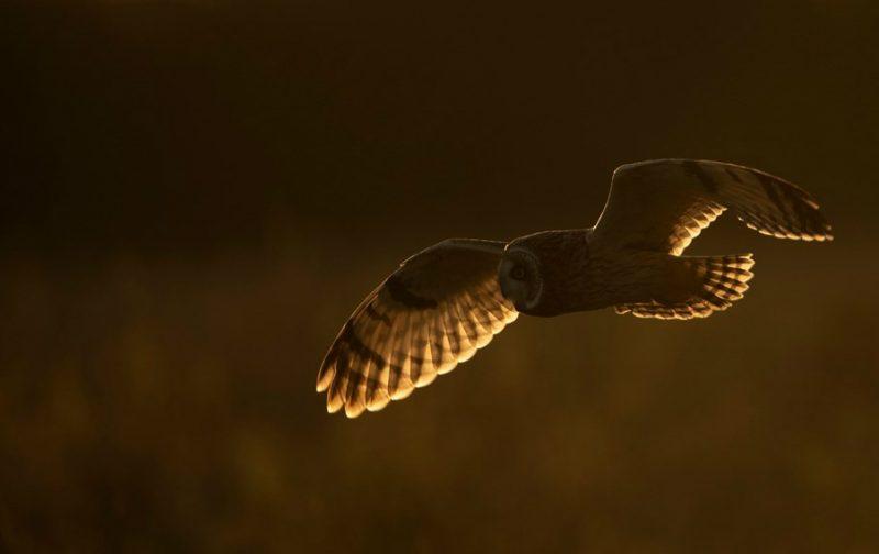 NOCTUA-Portugal: monitorização de aves noturnas