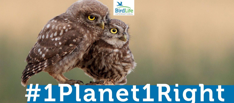 cartaz petição #1Planet#1Right com dois mochos-galegos
