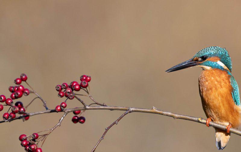 CANCELADO – Curso de iniciação à observação de aves