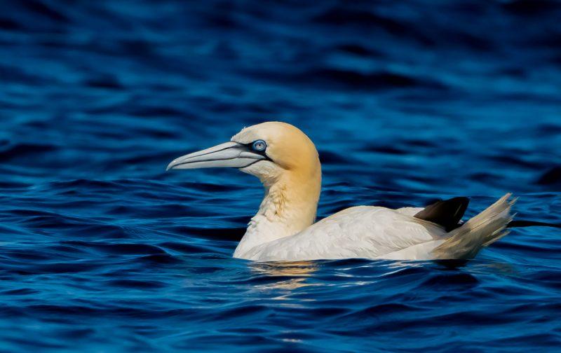 Minicurso de identificação de aves marinhas – ESGOTADO