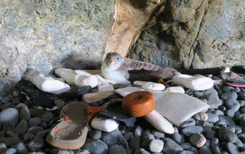 OceanLit: reduzir o lixo marinho