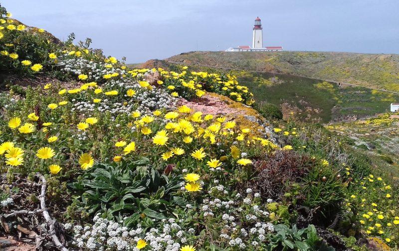 LIFE Berlengas é finalista do Prémio Europeu Natura 2000