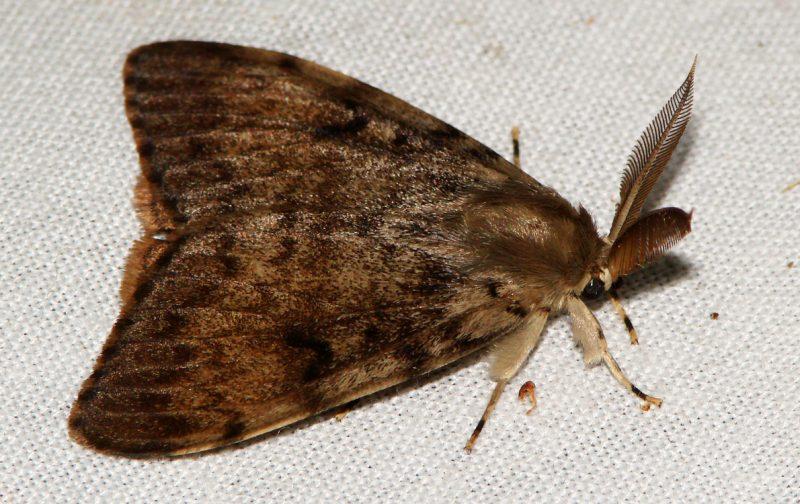 Tesouros da noite: O fabuloso mundo dos insetos