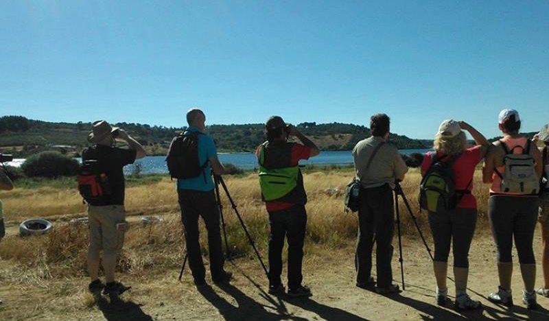 À descoberta das aves do Geopark Terras de Cavaleiros | EuroBirdwatch 2020