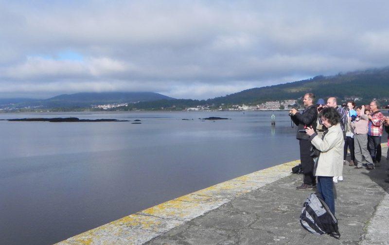Obversação de aves no Estuário do Rio Minho | EuroBirdwatch 2020