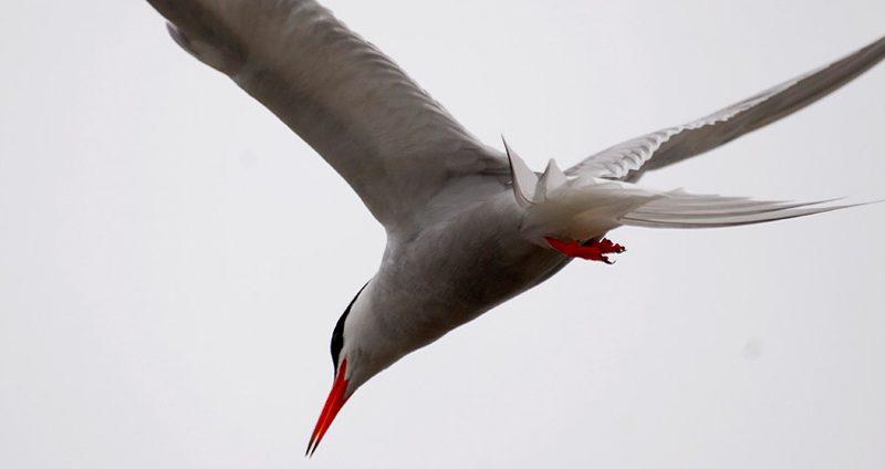 À Descoberta de Aves no Parque | EuroBirdwatch 2020