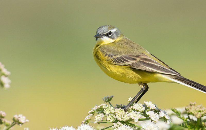 Ao Encontro das Aves nas Lagoas | EuroBirdwatch 2020