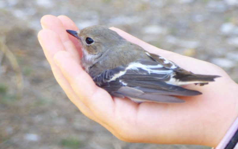 As Aves do Boquilobo | EuroBirdwatch 2020